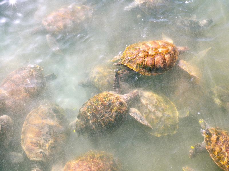 Cayman Island Turtle Farm