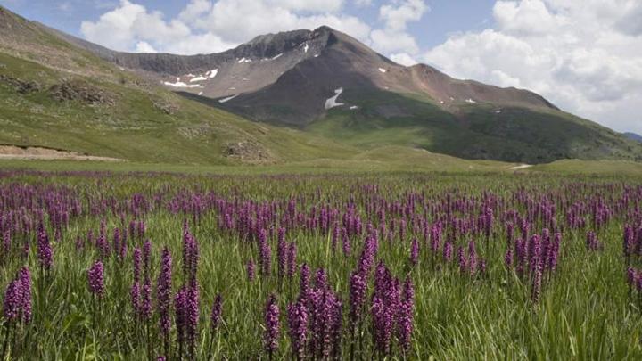 Colorado Alpine Loop Scenic Byway