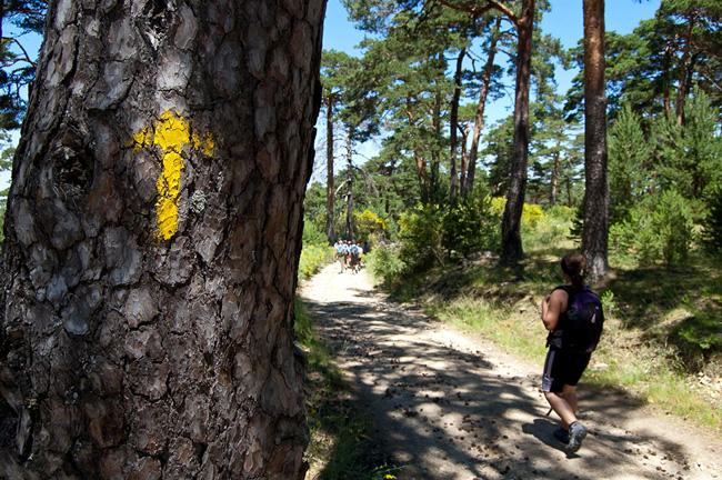 6 Tree Marker
