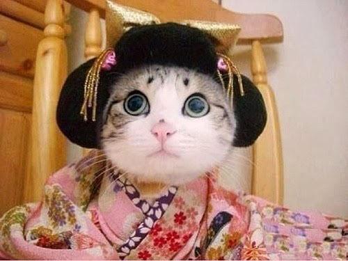 caterville.blogspot.com cat costume kimono