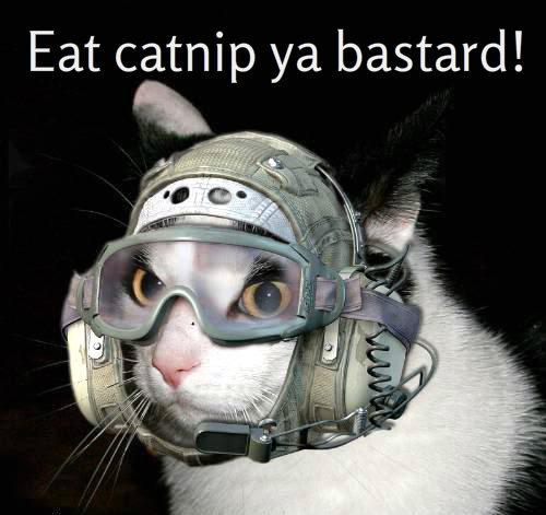 dailykos.com Cat costumes eat captnip