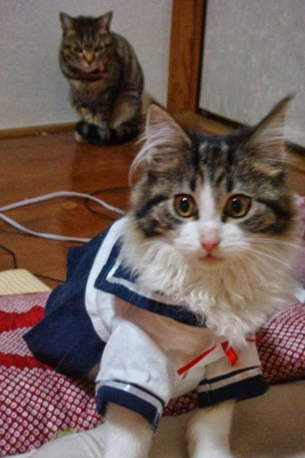 gleamingsfromthedawn.blogspot.com Cat costume sailor