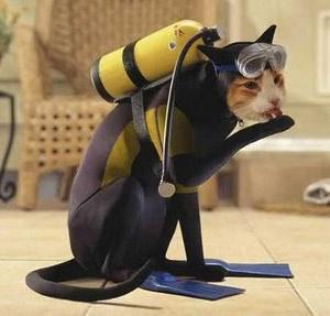 halloweencostumeideas.biz cat costume scuba dive