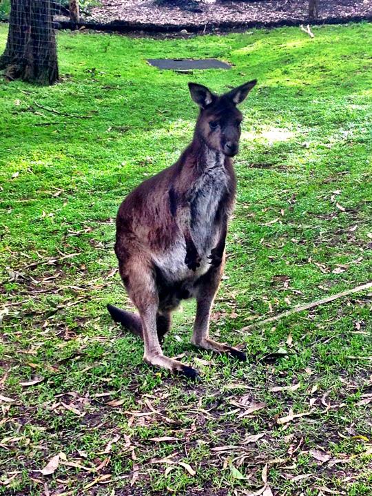 Healesville Sanctuary zoo Melbourne Australia