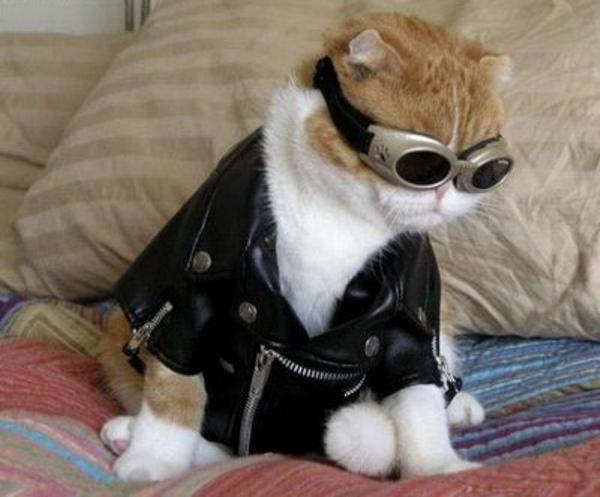 kittybloger.wordpress.com Cat costume pilot