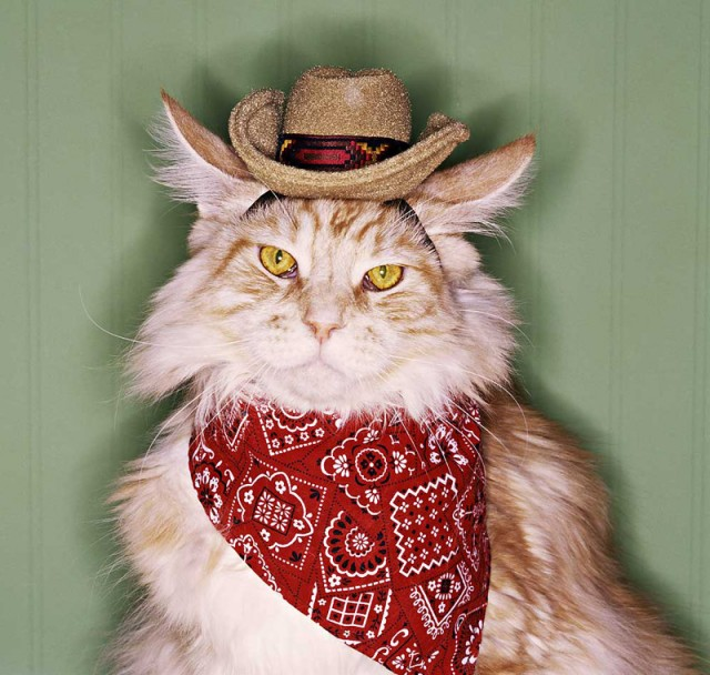 ohmygodcats.com cat costume country