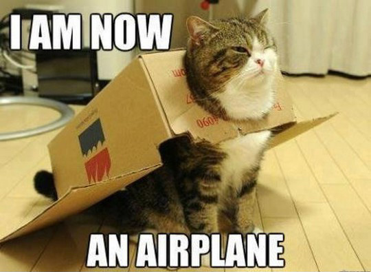 owned.com Cat Costumes airplane