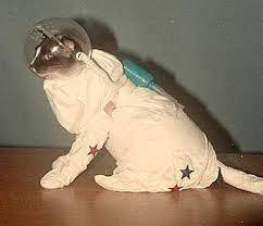 stuffpoint.com cat costumes astronaut