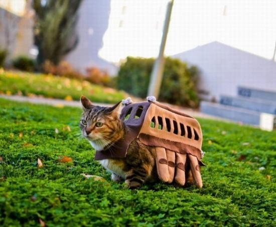 tonsofcats.com cat costume totoro