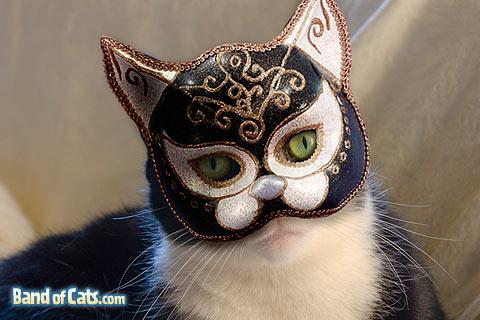 www.bandofcats.com cat costume masquerade