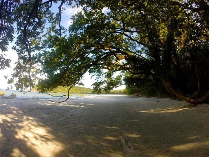 Cape Tribulation Beach sand Australia