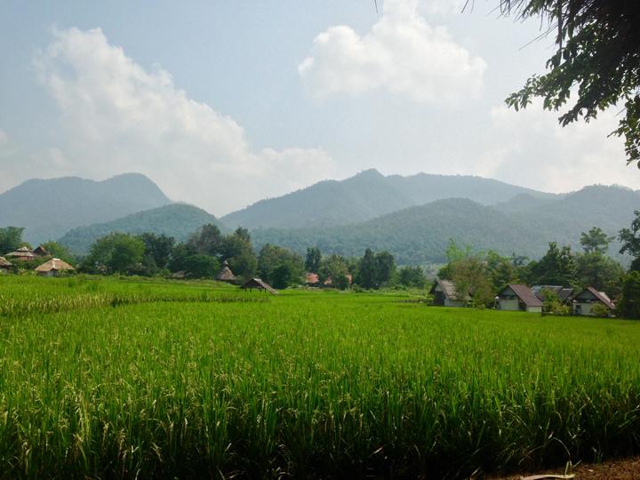Chiang Mai field