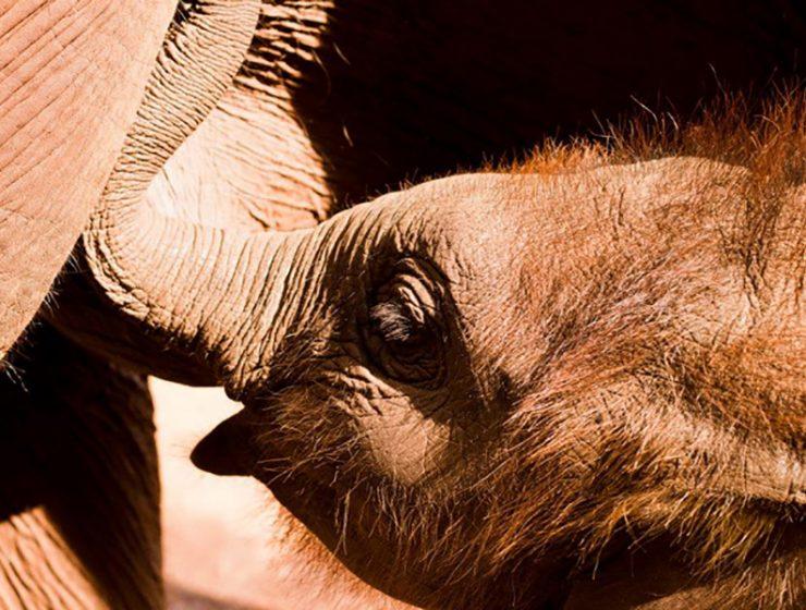 Elephant farm chiang mai