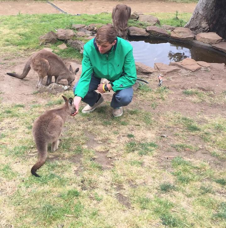 Evan Tasmania kangaroo