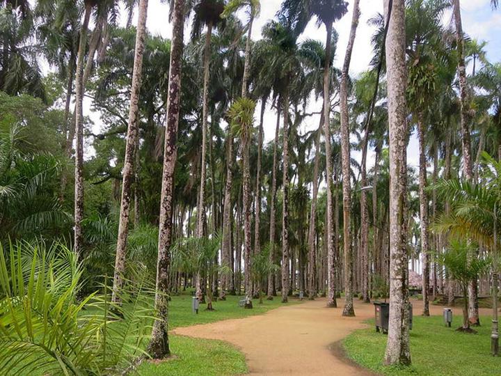 Flickr David Stanley Suriname