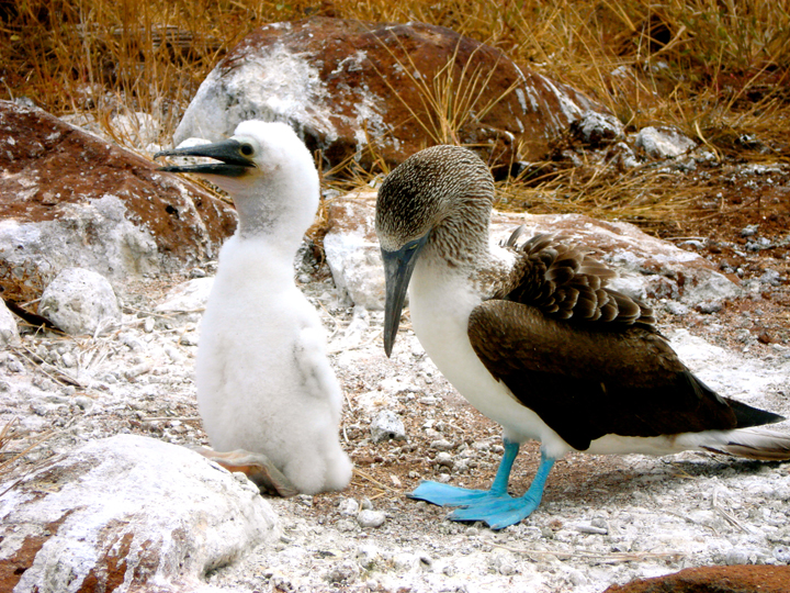 galapagos island 2