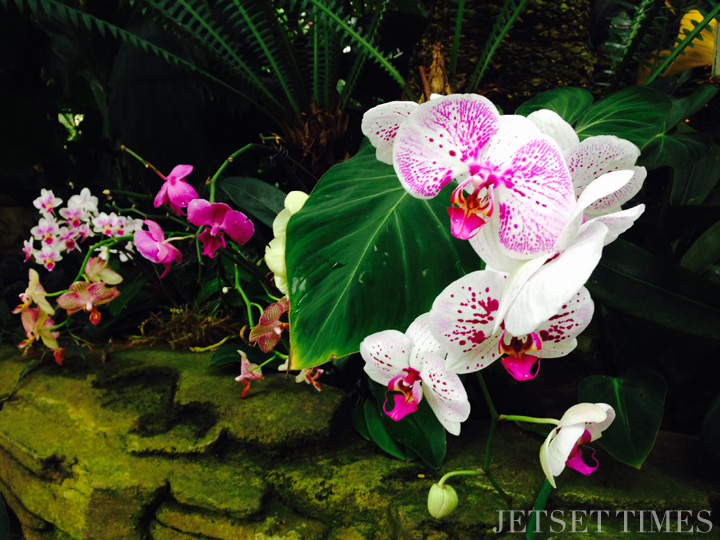 SF Conservatory of Flowers 1