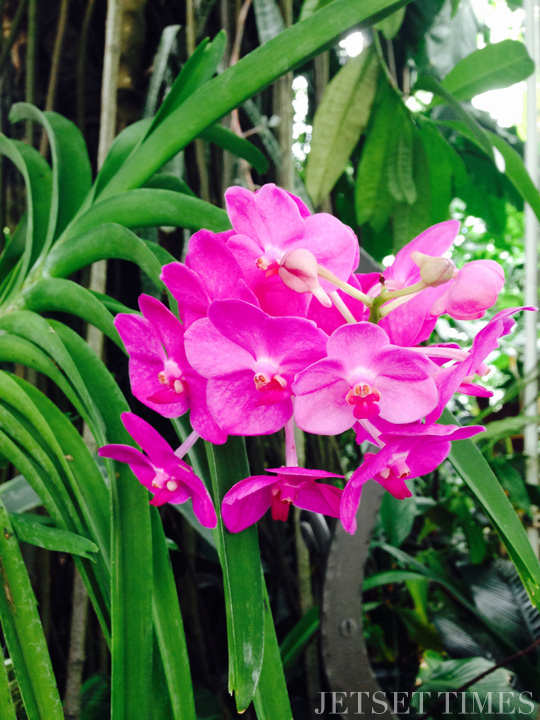 SF Conservatory of Flowers 2