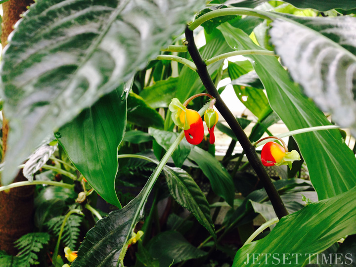 SF Conservatory of Flowers 4