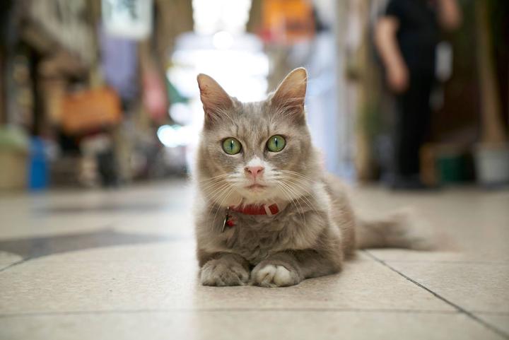 Facebook 広島県観光課 hiroshima google street view cats