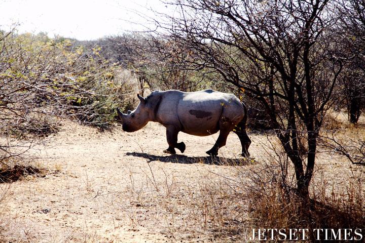 Botswana Rhino Khama