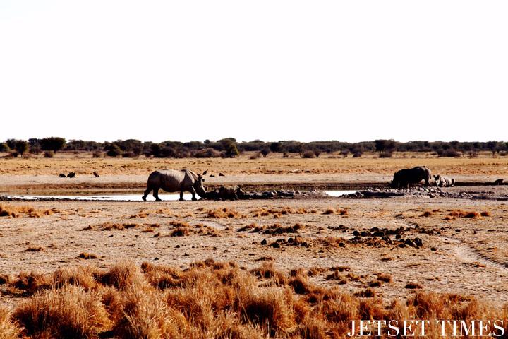 Botswana rhinos khama