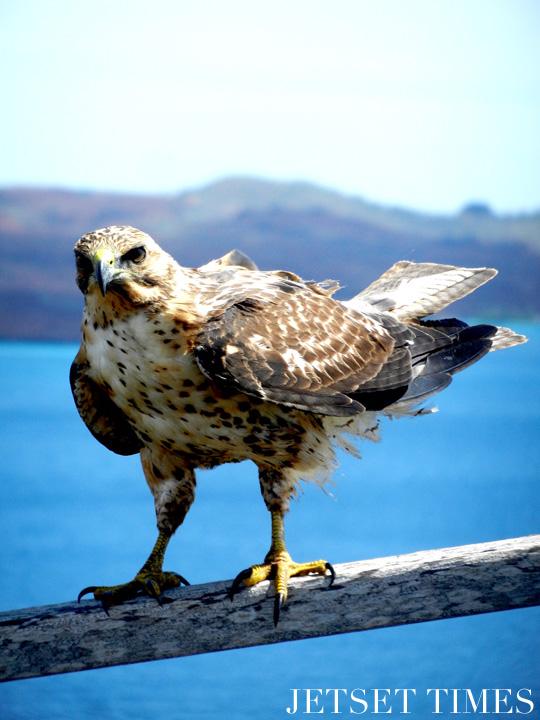 Ecuador Galápagos Islands bird