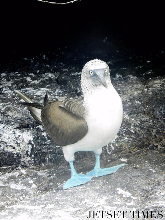 Ecuador Galápagos Islands widllife