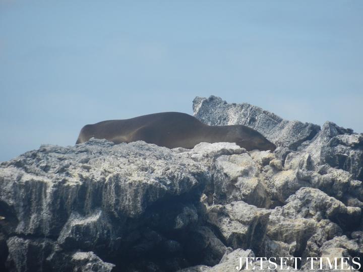 6 Siesta on a warm summer day Galápagos Islands Ecuador