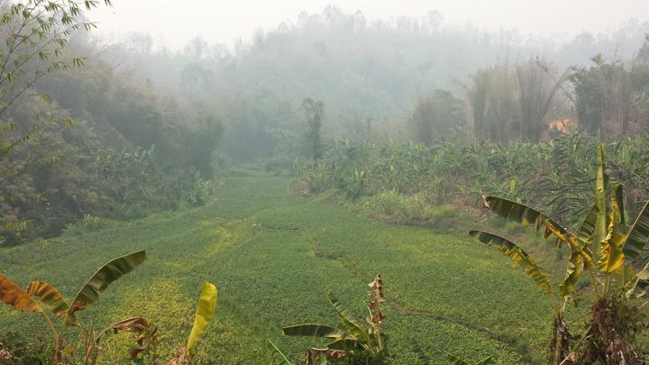 Louis Chiang Mai Thailand landscape