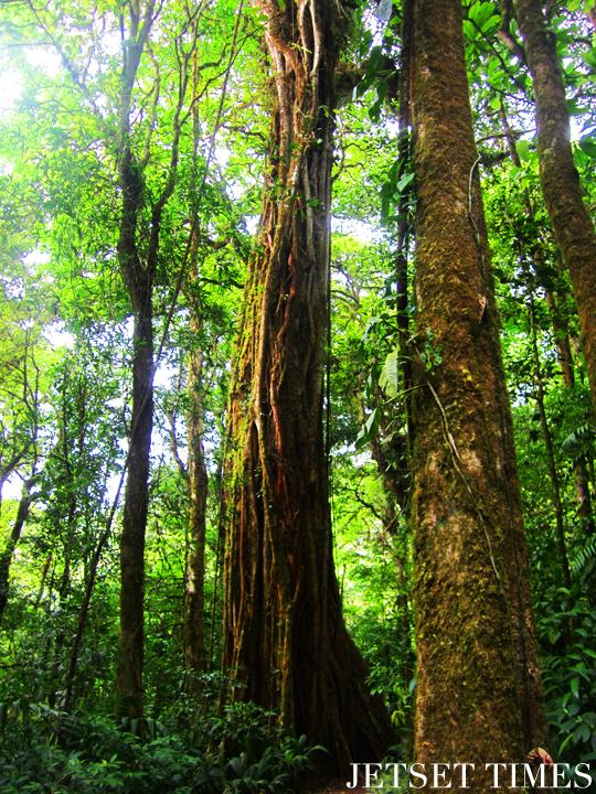 Monteverde, Costa Rica trees