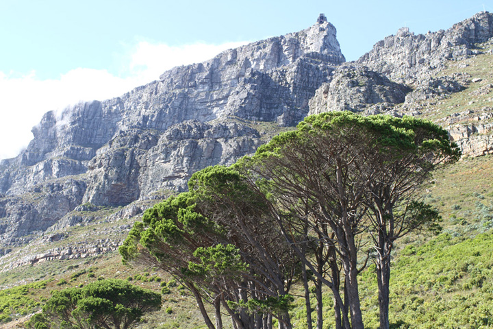 Table Mountain, Cape Town, South Africa. Frances Tao