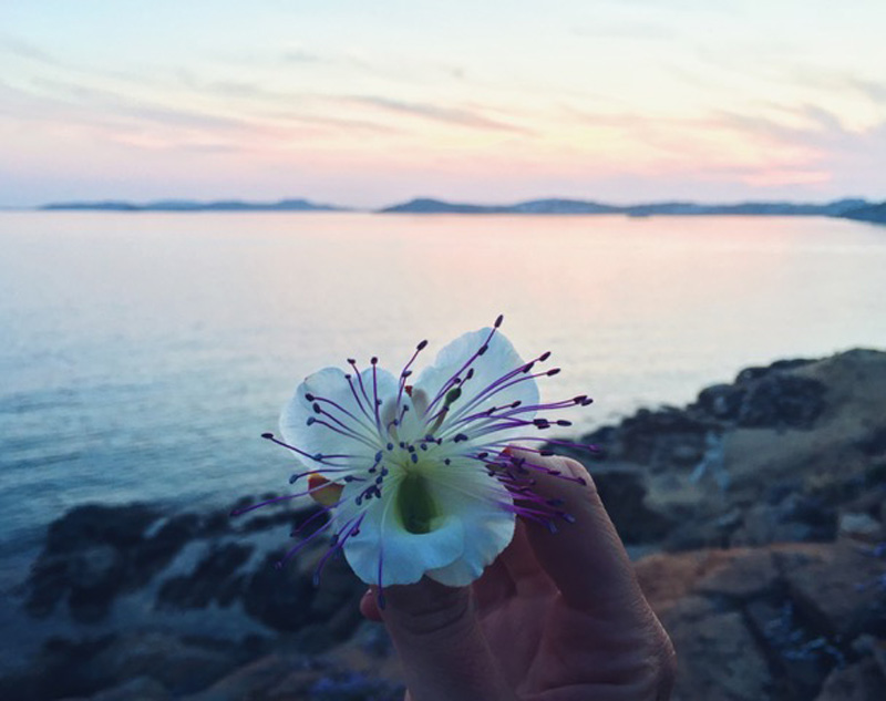 traveling flower