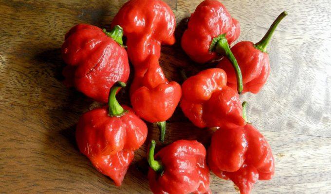 Pepper Trinidad Scorpion Butch T