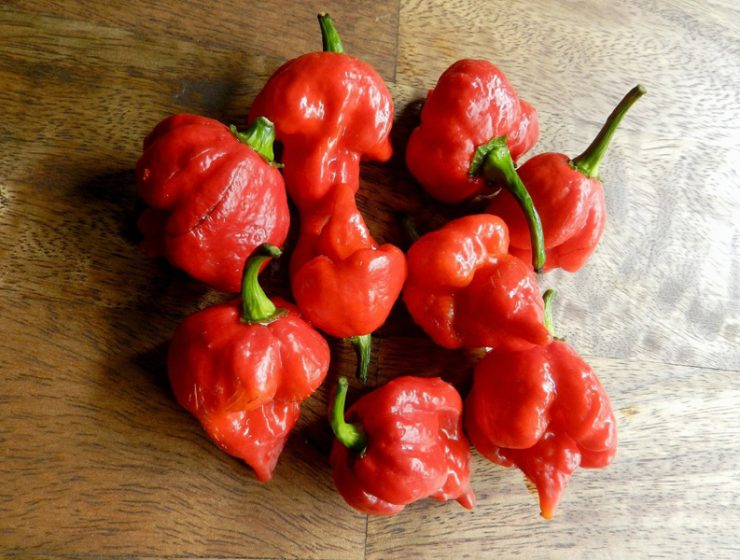 Pepper Trinidad Scorpion Butch T