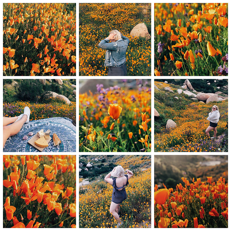 Superbloom Poppies