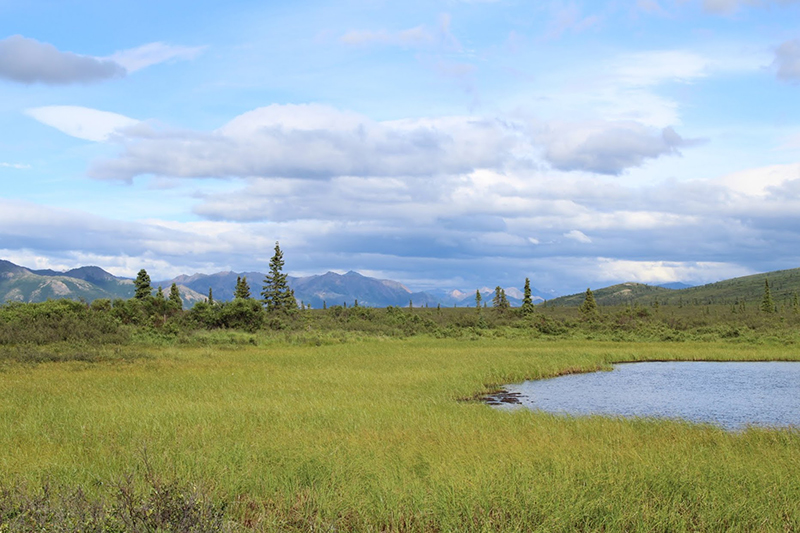 Breathtaking landscapes in every direction in Denali National Park.