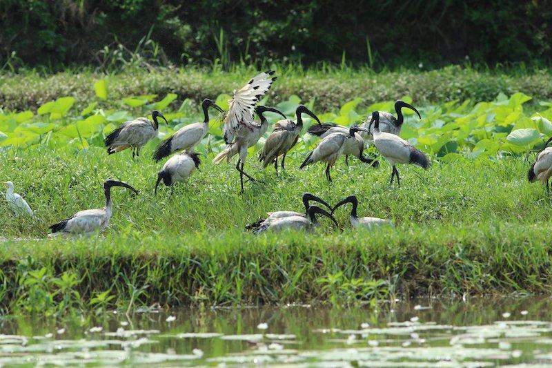 關渡自然公園 Guandu Nature Park