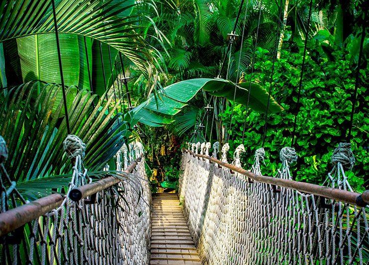 Pixabay Amazon rainforest
