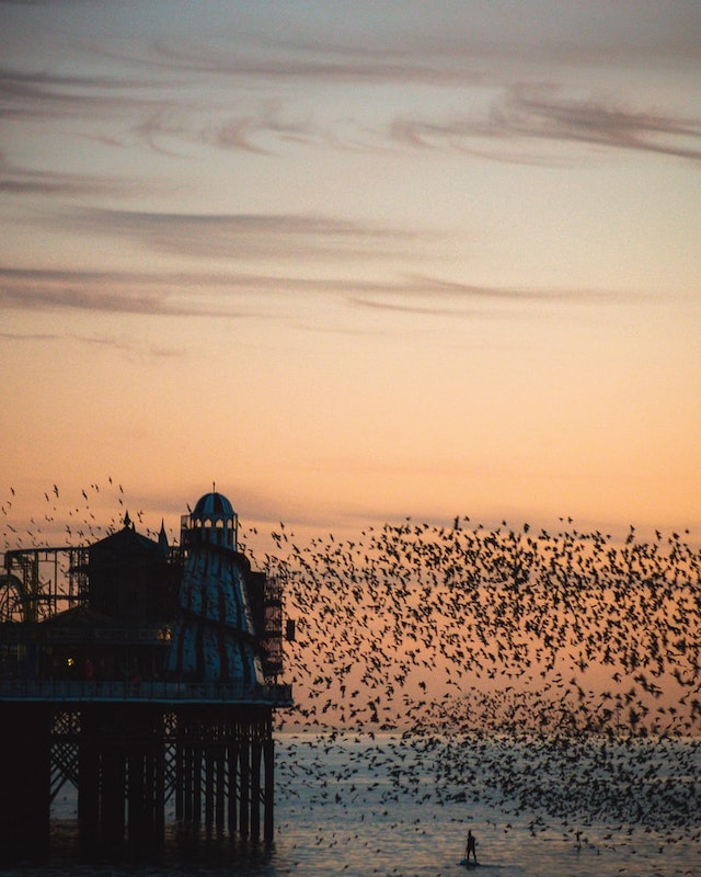 Brighton UK holiday maker