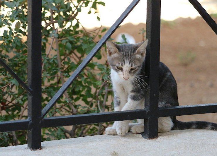 cat, jerusalem