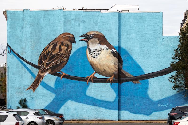 English Sparrows by Evan Lovett of VURT