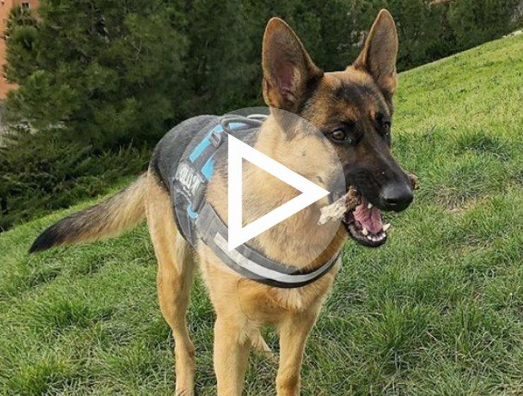 Aria Madrid dog parks